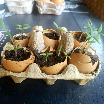 tomato egg shel eco balance lifestyle