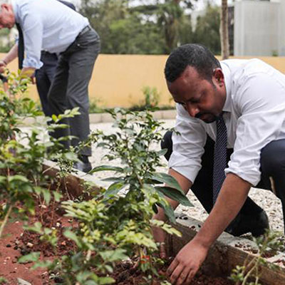 ethiopia plants 350 million trees in 12 hours eco balance lifestyle