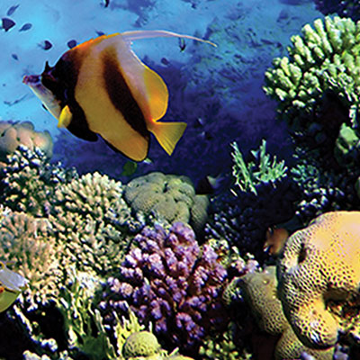 sunscreen damages coral eco balance lifestyle