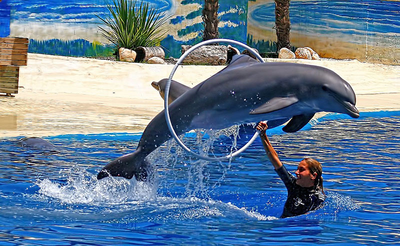 dolphins in captivity eco balance lifestyle