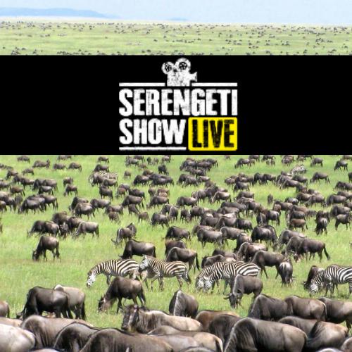Ecobalance-Lifestyle-Serengeti-Show-Live