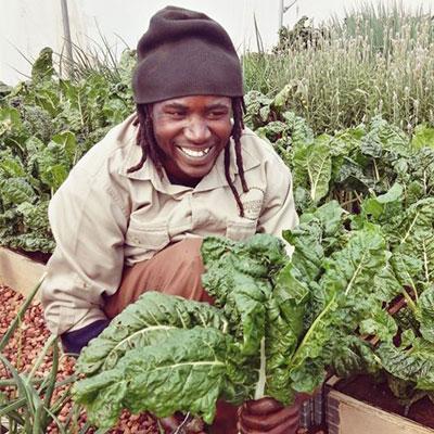 ebl-mhondoro-organic-vegetable-farming