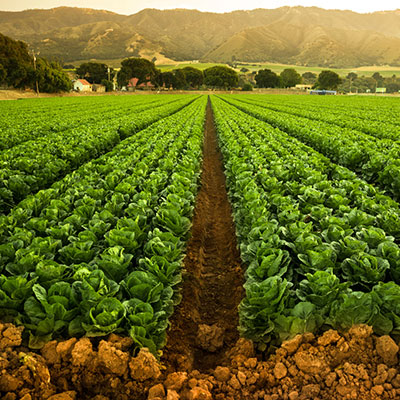 eco-balance-lifestyle-sustainability-food-producers