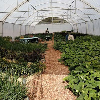 eco-balance-mhondoro-greenhouse